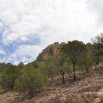 Vegetación camino a Chinacates, Durango