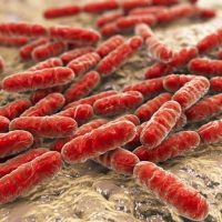 Eubacterias