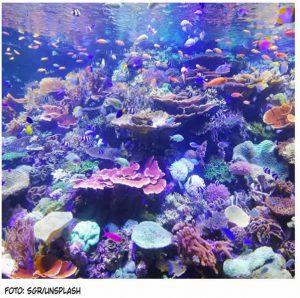 La lucha entre vida y basura en el océano
