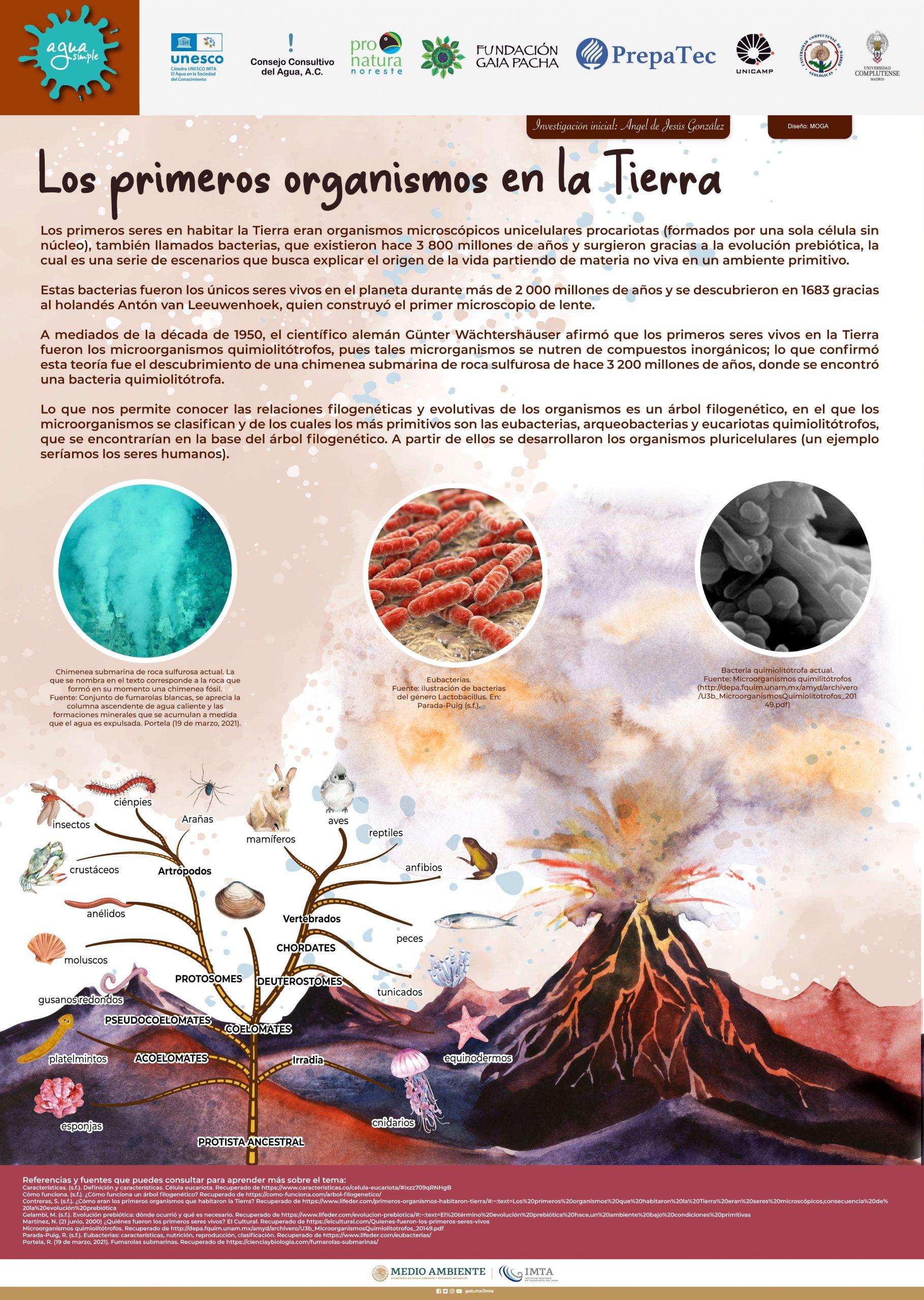 Los primeros organismos en la Tierra