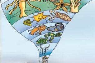 Terra: planeta água. Imagen: https://www.coladaweb.com/biologia/evolucao/primeiros-seres-vivos