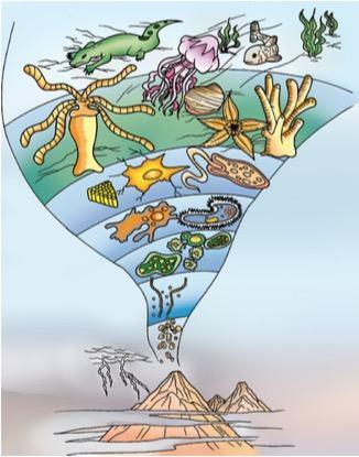 Terra: planeta água