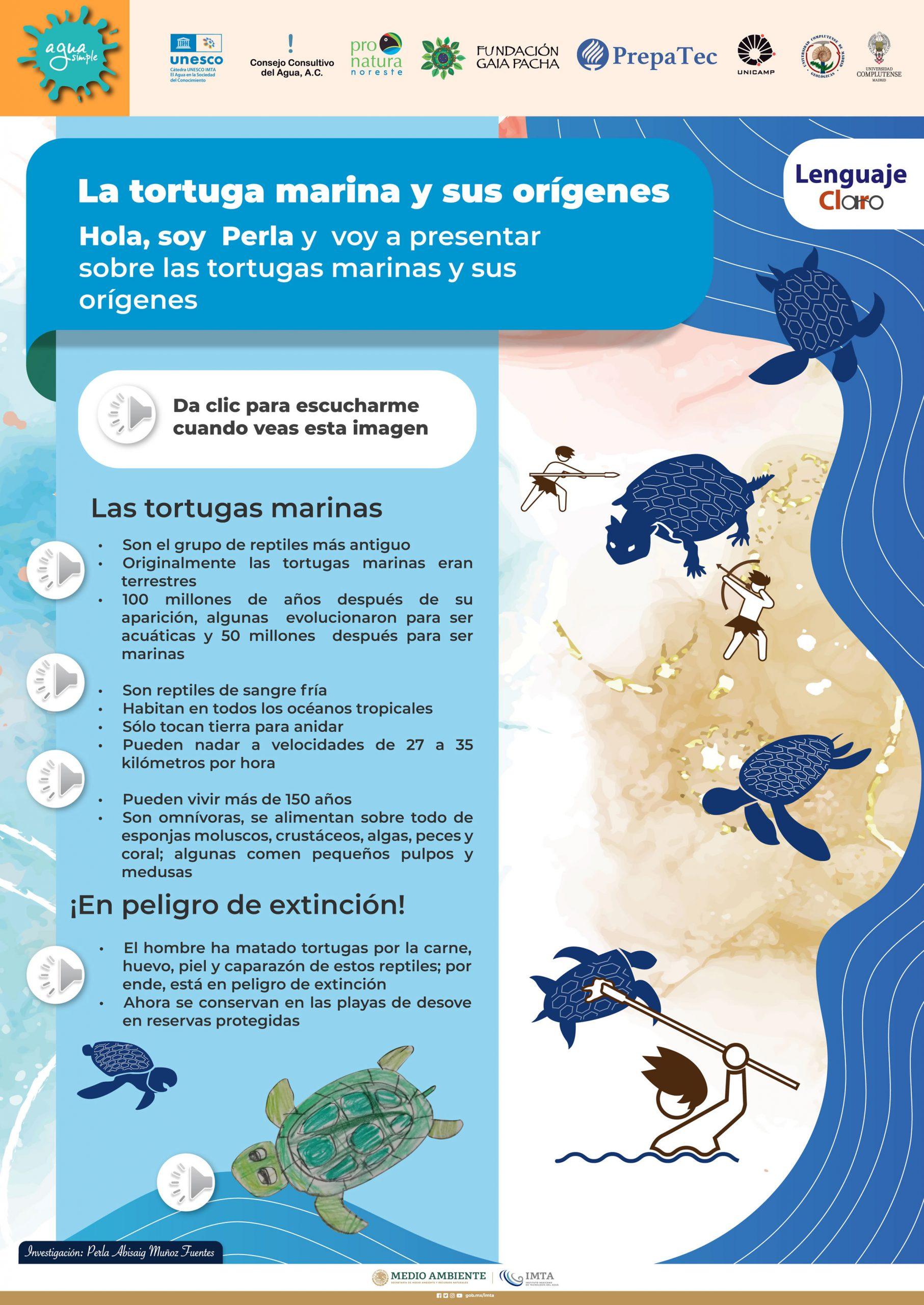 La tortuga marina y sus orígenes