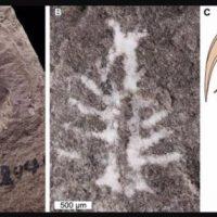 mineral moldeó el cerebro de un cangrejo